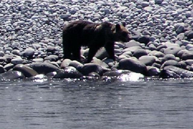 【北海道・知床・クルーズ】世界でも希少!クマを観察できるベアウォッチングコース