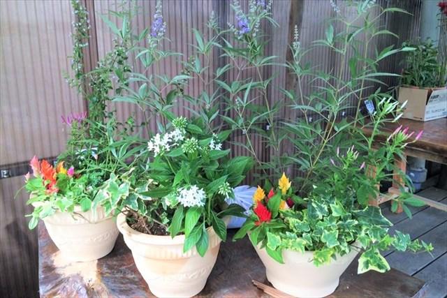 【千葉・銚子・寄せ植え】季節の花や観葉植物を自由に植えよう!ミニチュアガーデニング体験