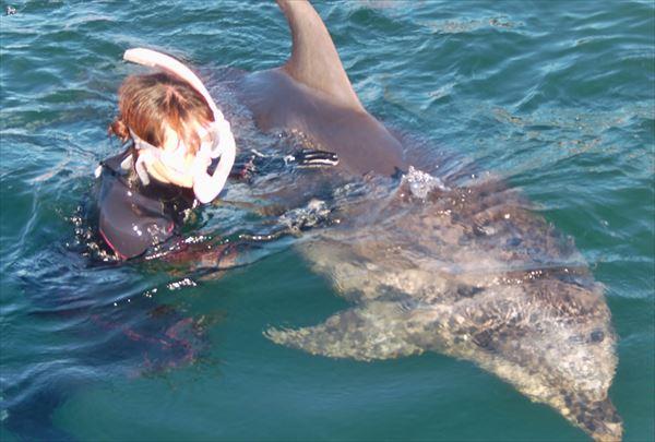 【静岡】伊東の海をイルカと泳ごう!ドルフィンスイムプラン