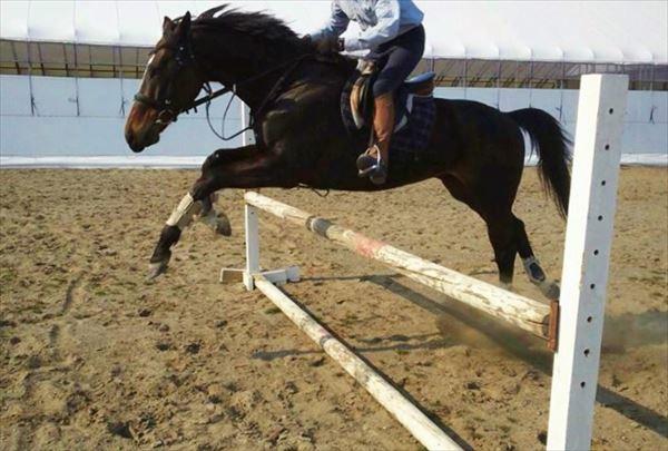 【体験・全4回】北海道・乗馬を始めたい人におすすめ!日にちを選べる体験プラン