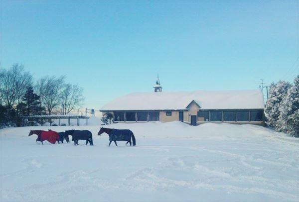 【曳き馬】馬の背で北海道の風を感じよう!馬場をぐるり1周お手軽プラン
