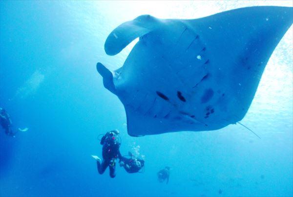 【ファンダイビング】3つのポイントを選んで潜れる!ケラマの海で魚になろう