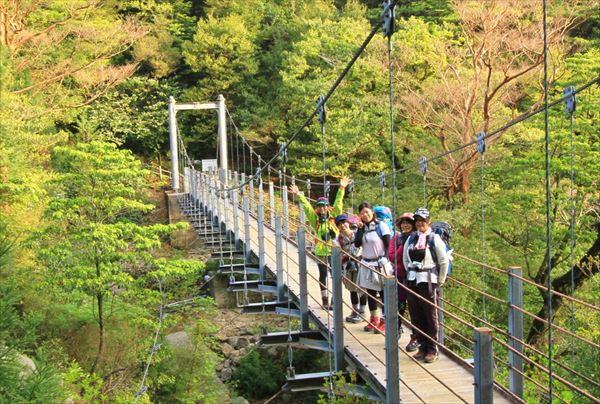 【苔むす森と太鼓岩からの絶景!】白谷雲水峡 奉行杉コース