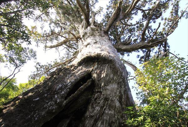 【モッチョム岳トレッキング】海を見渡す眺望と、巨大な万代杉!
