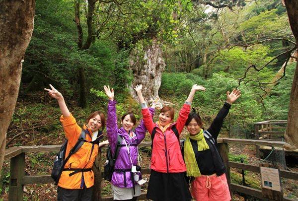 【縄文杉トレッキング】屋久島が世界に誇る巨木に会いに行こう!