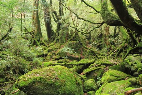 【半日・4時間でご参加OK】白谷雲水峡「苔むす森」半日コース