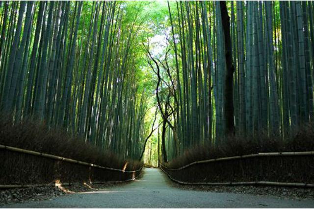 【京都・フォトガイドツアー・4時間】旅のフォトムービーをお届けします!ペアプラン