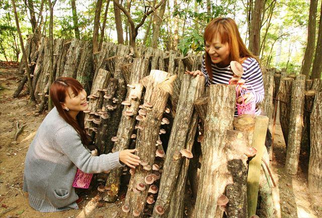【兵庫・シイタケ狩り&バーベキュー】自然の恵みを堪能しよう!
