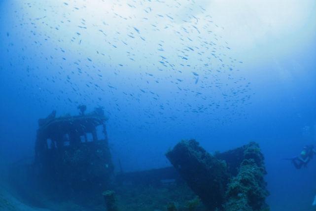 【新潟・佐渡・ファンダイビング】辺り一面が青の世界。2ボートダイブプラン(ライセンスお持ちの方)