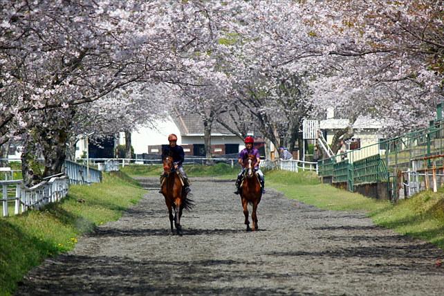 【宮崎・乗馬30分】充実の設備&本格体験で上級者も大満足!乗馬経験者プラン
