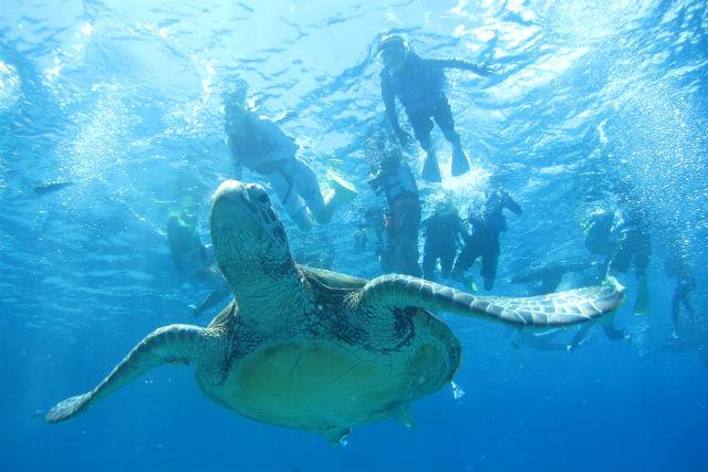 ケラマの海をウミガメと泳ごう!3つのポイントを巡るシュノーケリング