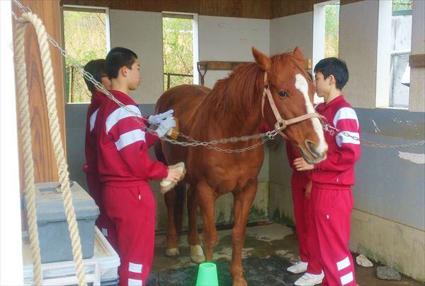 【団体・10名様~】山中湖村で馬とのふれあい体験&引き馬プラン