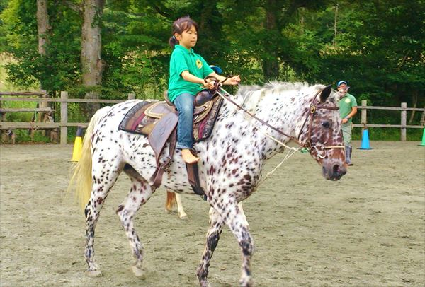 【団体・10~20名】山中湖村で牧場の仕事体験&ふれあい乗馬プラン