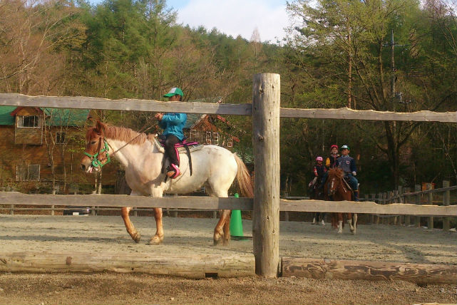 【山梨・山中湖・40分・フリー乗馬】乗馬経験にオススメ!一人で乗れるフリー乗馬プラン