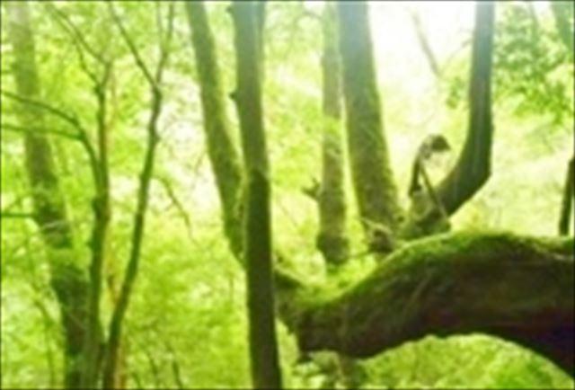【1日】屋久島の自然を満喫!白谷雲水峡ハイキング