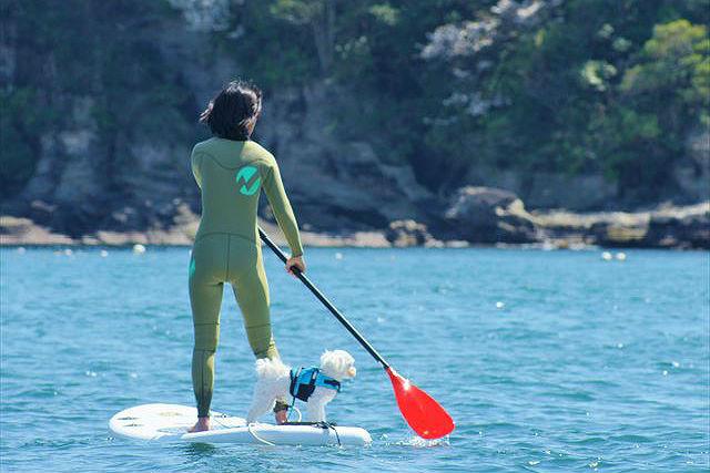 【神奈川葉山・SUP】愛犬と一緒に海上クルージング!葉山の海で、ワンコSUP