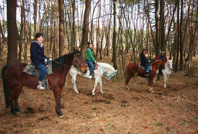 【八ヶ岳・乗馬体験】大感激の60分!人懐っこい馬たちと森林トレッキング