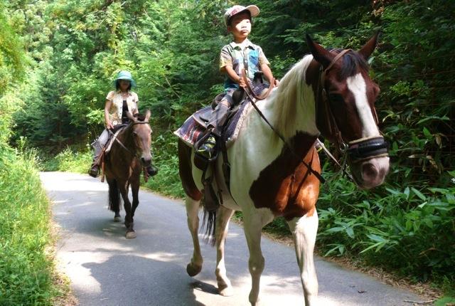 【広島・安芸・15分・乗馬体験】初めての乗馬に挑戦!外の散歩15分プラン