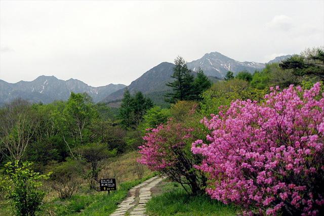 【八ヶ岳・トレッキング】絶景を歩こう。八ヶ岳エコソムリエの解説も楽しい!美し森まきば公園半日プラン