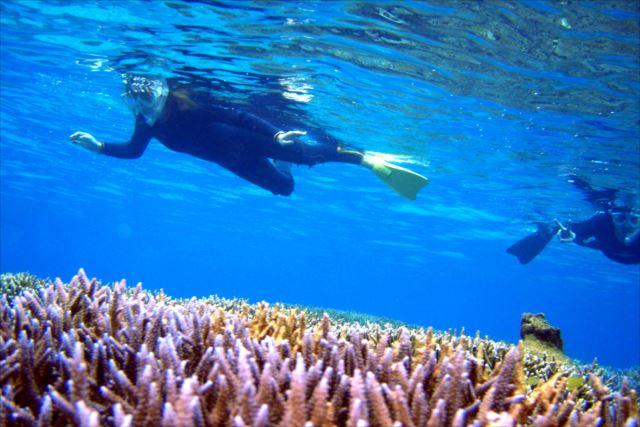 【シュノーケル&カヌー・ランチ付】石垣島・サンゴ礁とマングローブ林を探検しよう!