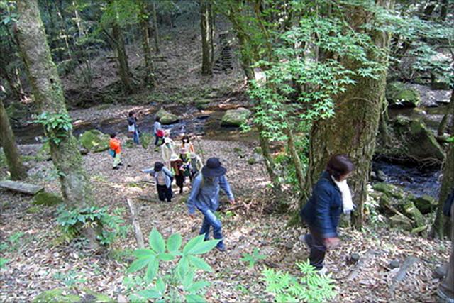 【鹿児島・曽於市・ガイドツアー】名物お弁当付き。静かな森と、川をを感じる悠久の森&大川原峡ツアー