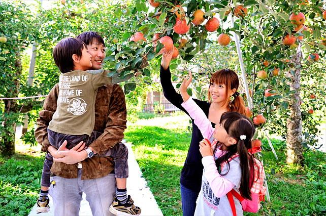 【群馬・りんご狩り】果実の魅力を味わいつくそう!観光フルーツ農園でりんご狩り!