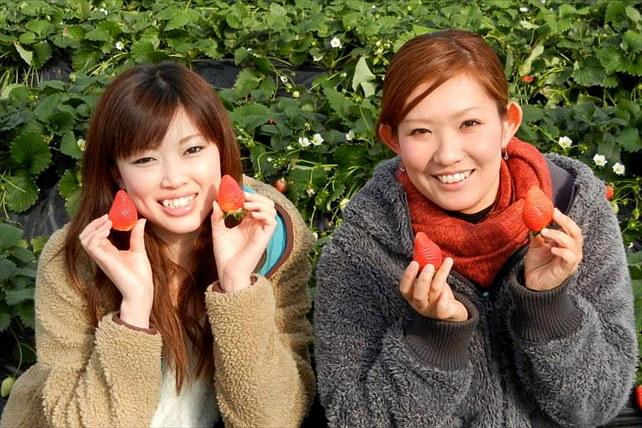【群馬・イチゴ狩り】採れたてイチゴが食べ放題!12月から6月まで楽しめます。★アップルクーヘン&ドリンク付き