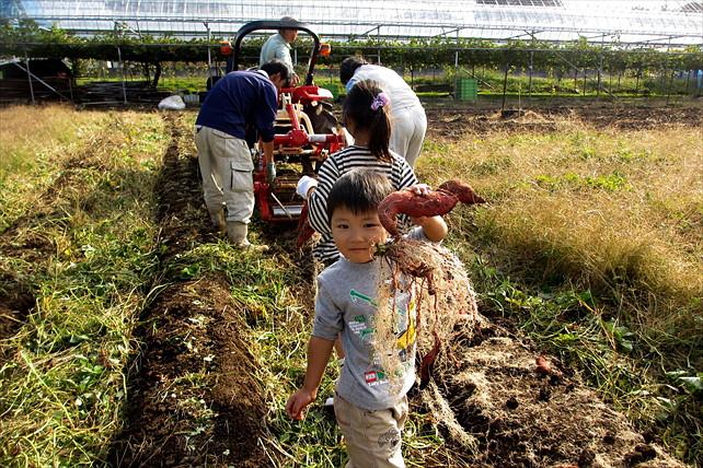 【山梨・芋掘り体験】キッズに大人気のさつま芋掘りを楽しもう!甘くてホクホク「紅はるか」
