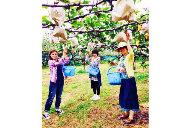 【福岡・梨狩り】福岡県筑後・堆肥栽培の甘い梨を堪能!梨狩りプラン