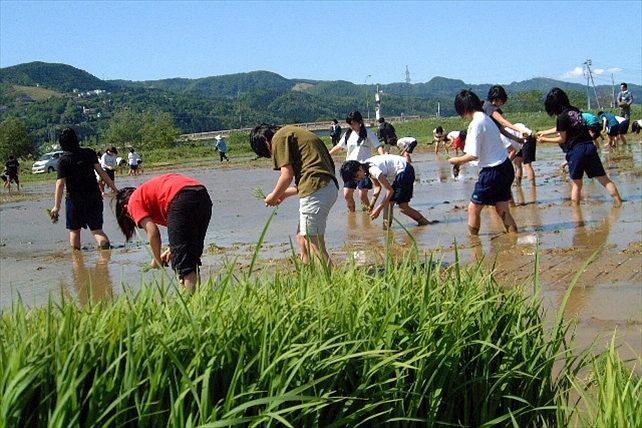 【新潟県魚沼・田植え体験】自分の手でお米を作る!日本有数の米処、新潟県魚沼で田植え体験
