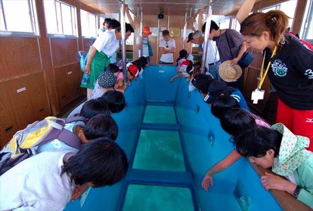 【高知・グラスボート】海中世界を気軽に遊覧!竜串の海の珊瑚礁を見てみよう