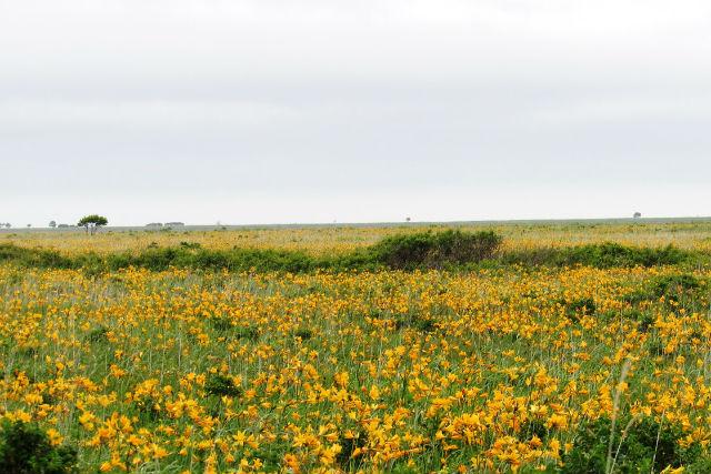 【釧路・ガイドツアー・1日】釧路の自然を満喫しよう!充実の1日フリープラン