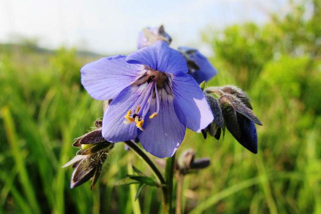 【北海道・ガイドツアー・2時間】蝶のように花から花へ。夏の霧多布ツアー・レギュラーコース
