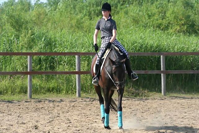 【北海道・南幌ライディングパーク・乗馬体験30分】初めての乗馬で駈けてみよう!