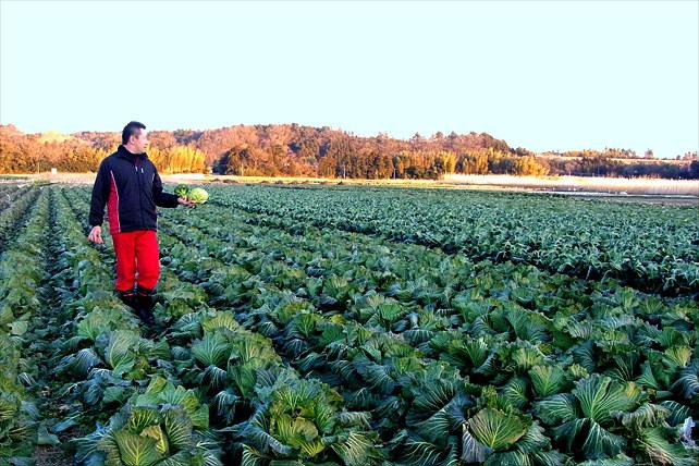 【いわき市・農業体験・半日】若手農業家のリーダーとお米&野菜の収穫体験