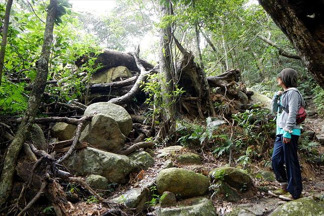 【半日・トレッキング】沖縄県最高峰、於茂登岳の頂上へ!半日トレッキングプラン