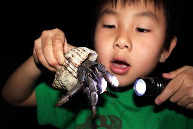 【石垣島・エコツアー】普段見られない生き物に出会えるかも!五感で自然を楽しむナイトツアー