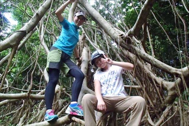 【小笠原・父島・半日・森歩き】世界遺産の森を体感できるフォレストウォーク!