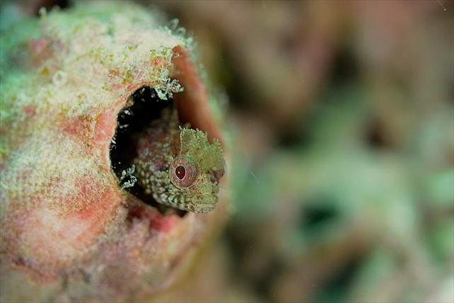 【山口県青海島・体験ダイビング】天然記念物指定の海で、生きものの暮らしを覗くダイビング体験