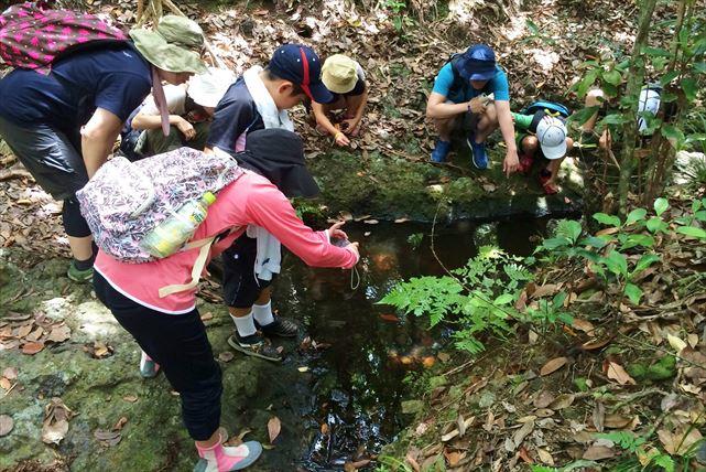 【ジャングルツアー・1日コース】自然の宝庫、小笠原の秘境を1日探検!