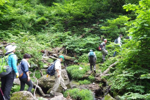 【鳥取・氷ノ山】山頂までの登山ツアー・仙谷コース(中級者向け・6時間)