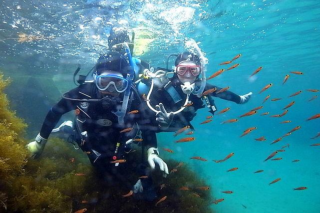 【新潟・佐渡・半日体験ダイビング】日本ジオパーク認定!自然あふれる佐渡島でダイビング!★写真プレゼント
