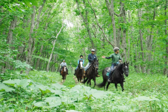 【北海道・苫小牧・体験乗馬】大自然の中で本格的な乗馬を体験!体験外乗プラン(90分)