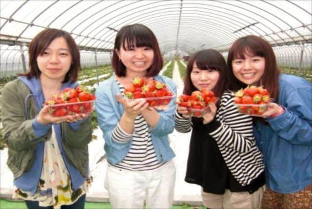 【鹿児島県・イチゴ狩り体験】美味しくて安心・安全!こだわりいっぱいのイチゴ狩り!