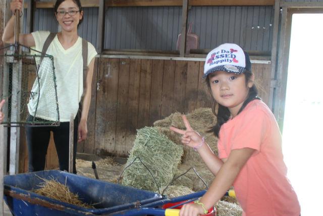 【山梨・八ヶ岳・乗馬体験】みんなで馬のお世話!牧場体験(団体向け)