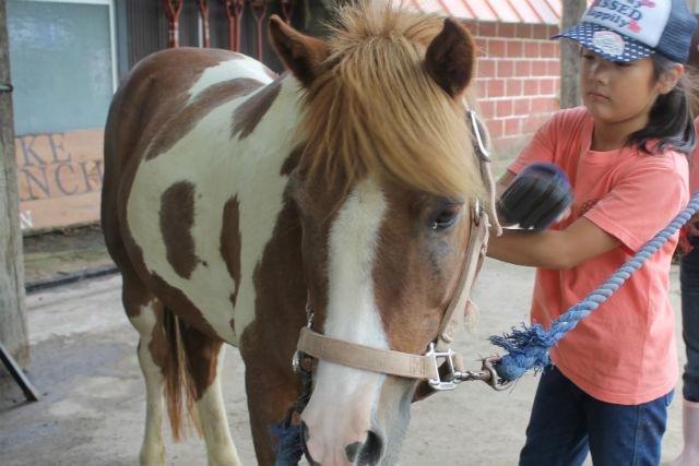【山梨・八ヶ岳・乗馬体験】みんなでたっぷり楽しめる!牧場体験プラン(団体向け・1泊2日)