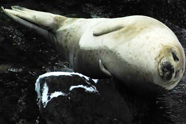 【積丹半島・スノートレッキング】積丹半島の「とっかり」ツアー。野生のアザラシに癒されよう