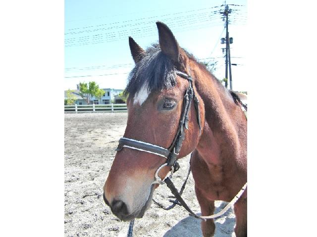 【鹿児島・引き馬】やさしい馬とゆっくりお散歩!引き馬を体験してみよう