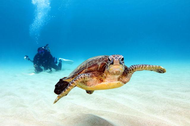 【奄美大島・ファンダイビング】地形とサンゴ、ウミガメを楽しもう!ビーチダイビング