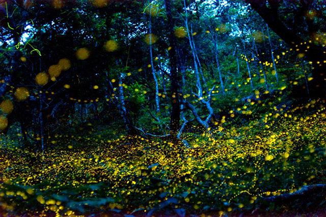 【石垣島・ナイトツアー】石垣島は夜も遊べる!童心に返って森探検に出発しよう